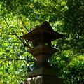 写真: 夏の緑