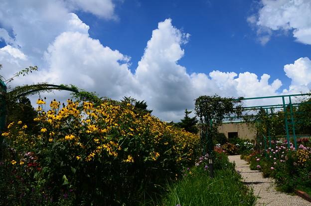 夏雲湧くガーデンミュージアム比叡