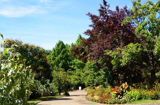 夏の植物公園