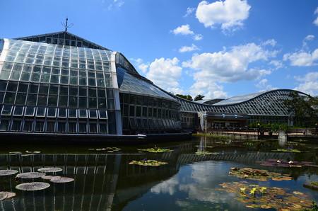 夏の終わりの京都府立植物園