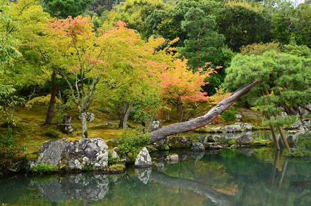 曹源池の色付き