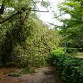 写真: 近衛邸跡