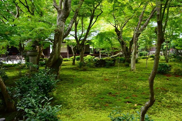 緑の十牛の庭