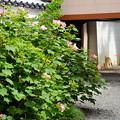 芙蓉と彼岸花の風景