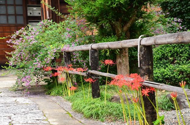 萩と彼岸花の風景