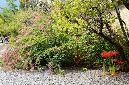 萩と彼岸花咲く参道
