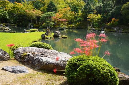 彼岸花と紅葉の曹源池
