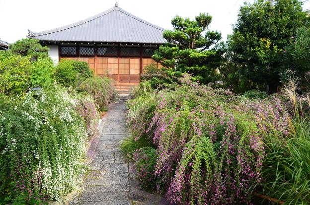 萩と薄の常林寺