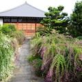 写真: 萩と薄の常林寺