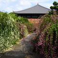 写真: 満開の萩の寺