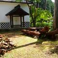 Photos: 切られた木