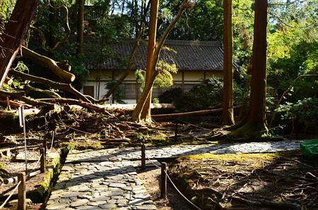 法然院にも台風の被害が、、、