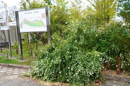 梅小路公園の萩(ハギ)