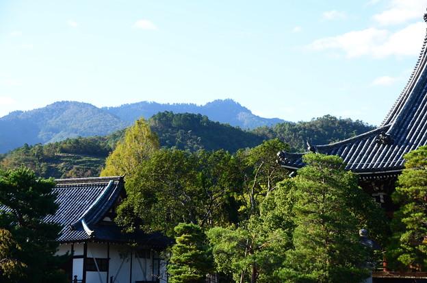 清涼寺から見る鳥居形