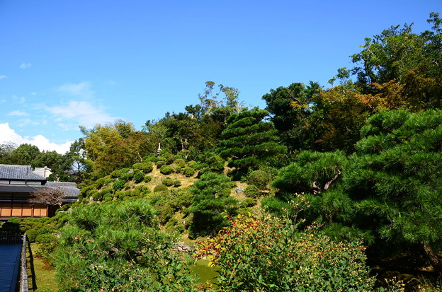 秋空の下の名勝庭園