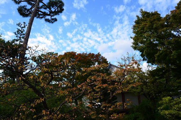 秋空の下に