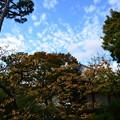 写真: 秋空の下に
