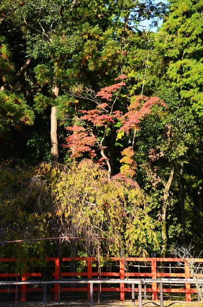 紅葉と風流桜