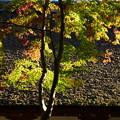 写真: 渉渓園の色づき