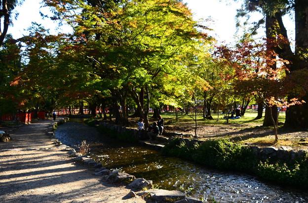 少し色づいた奈良の小川