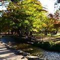 写真: 少し色づいた奈良の小川