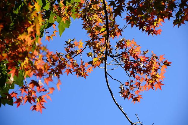 Photos: 秋への入口