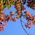 写真: 秋への入口