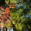 写真: 渉渓園の紅葉