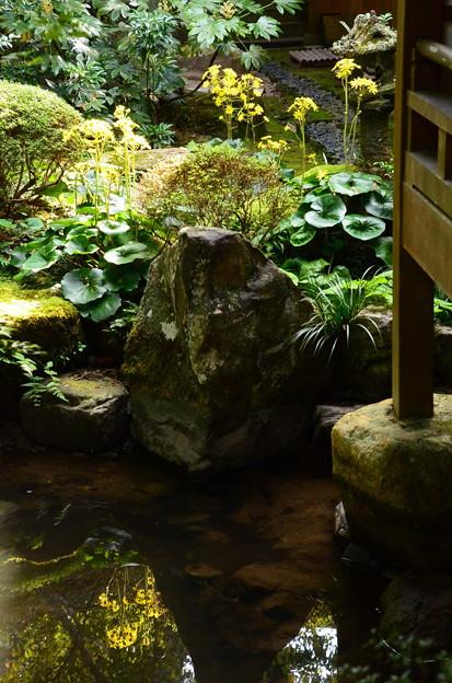 聚碧園の石蕗(ツワブキ)