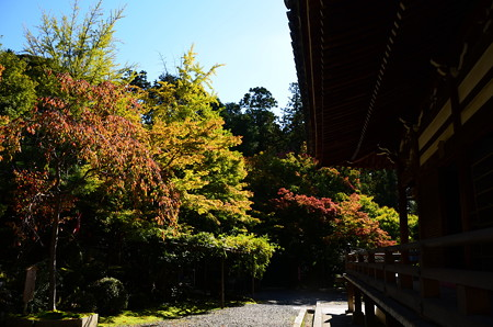 今熊野観音寺の色づき