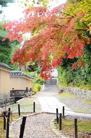 金戒光明寺への道