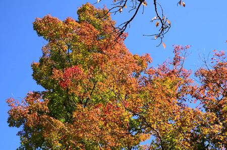 秋空の紅葉