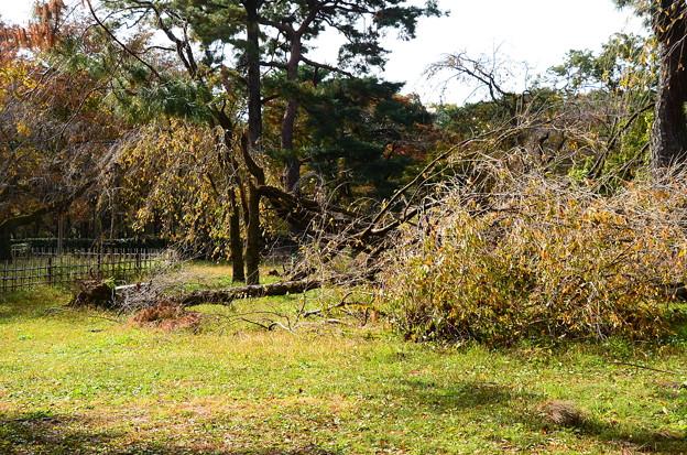 京都御苑の惨状