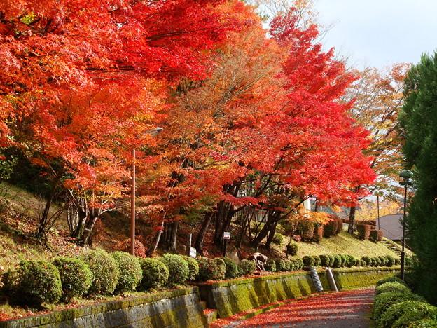 府立ゼミナールハウスの紅葉