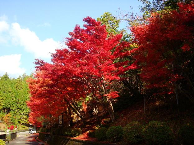 ゼミナールハウスの紅葉