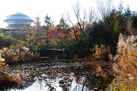 モネの池の紅葉