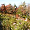 紅葉と秋桜