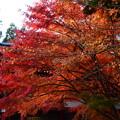 延暦寺の紅葉