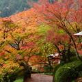 写真: 色づく善峯寺