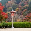 写真: 釈迦堂脇の紅葉景色