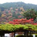 写真: 遊龍の松と紅葉