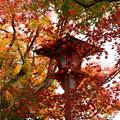 写真: 紅葉飾りの灯篭