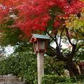 写真: 灯篭上の見事な紅葉