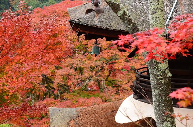 写真: 多宝塔脇の紅葉