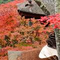 Photos: 多宝塔脇の紅葉