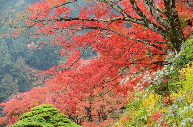 南天と紅葉
