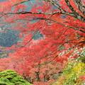 写真: 南天と紅葉