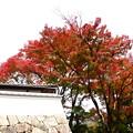 写真: 石垣と紅葉
