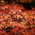 秋の燦めき