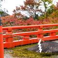 写真: 赤い欄干と紅葉